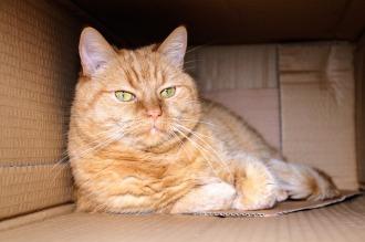 cat-1999679_1280
